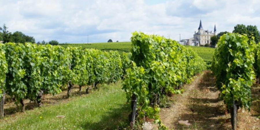 Γιατί η κλιματική αλλαγή απειλεί την παραγωγή κρασιού